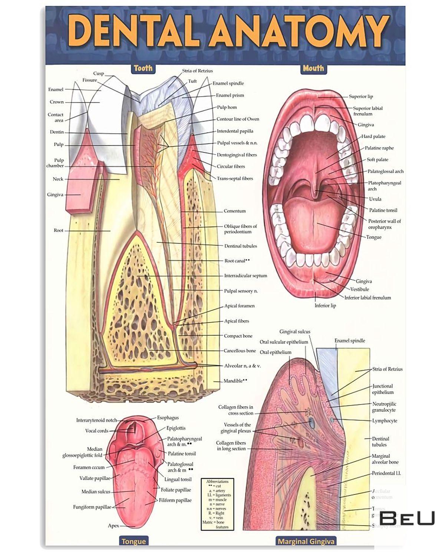 Dentist Dental Anatomy Poster